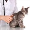 Ветеринарные клиники в Солигаличе